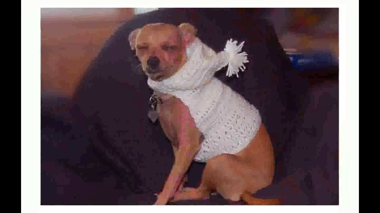 Dog Sweater Crochet Pattern Easy - YouTube
