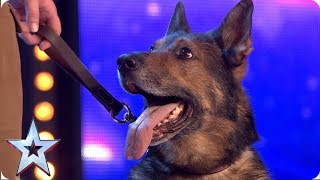 Heroic police dog Finn moves the Judges to tears | Auditions...