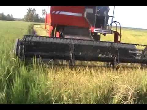 Resultado de imagen para bultos y plantas de arroz en colombia