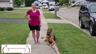 Kylo, The German Shepherd, Graduates 10 Day Board & Train: Dog Trainer Columbus Ohio