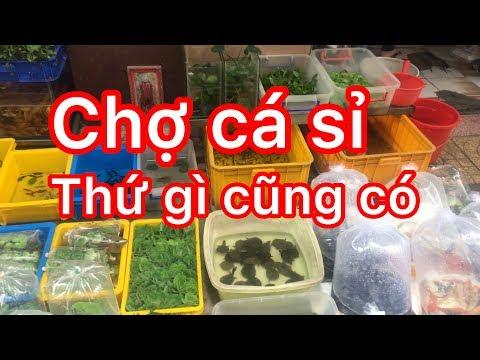 Chợ cá cảnh lâu đời nhất sài gòn - oldest fish market in Saigon