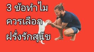 3 ข้อดีเดทฝรั่งรักสุนัข สั่งหนังสือ+เรียนภาษาอังกฤษออนไลน์ไลน์ไอดี pimja41