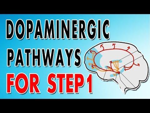 Dopaminergic Pathways (Mesocortical, Mesolimbic, Nigrostriatal, Tuberoinfundibular)