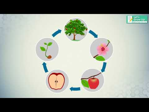 The Tree Life Cycle | #Tree Lifecycle | #Flower to Fruit - YouTubeYouTube