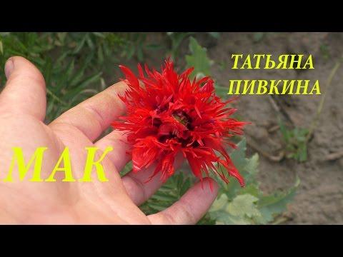 Интернет-магазин Семена России - Купить семена почтой