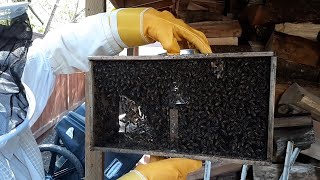 Shungite Beehives featured on Modern Living with kathy ireland®