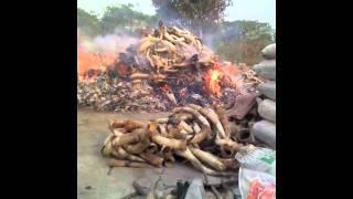 Nigeria: burning bones in Lagos
