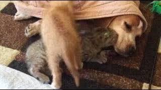 """Иногда мне кажется, что девиз всех котов: """"Докопайся до спящего"""""""