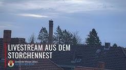 Die Storchenkamera in Winsen (Aller) - Livestream vom 29. April 2020
