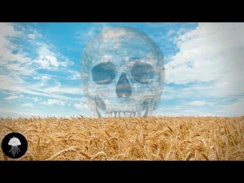 La pire erreur de l'humanité (l'agriculture) - DBY #55