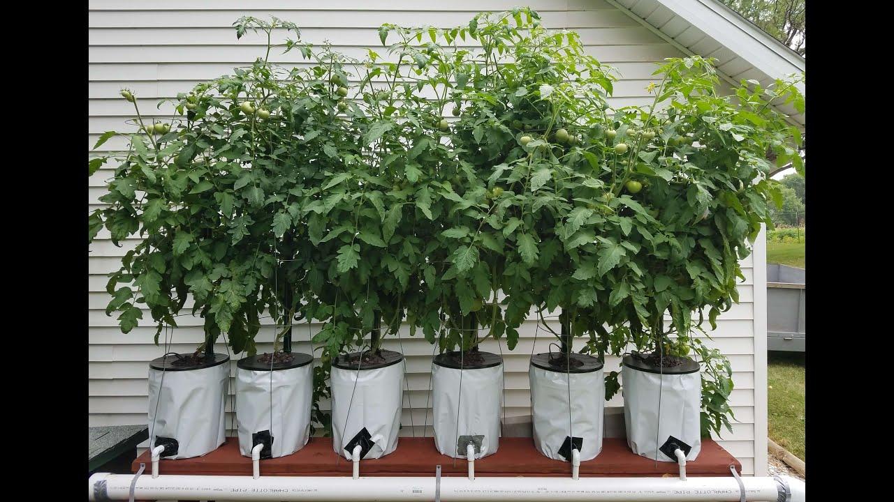 Hydroponics Easy Self Sustaining Beginners Diy Tomato Drip System