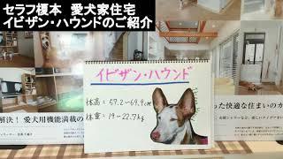 みなさん、こんにちは。セラフ榎本愛犬家住宅です。 本日の犬種のご紹介...