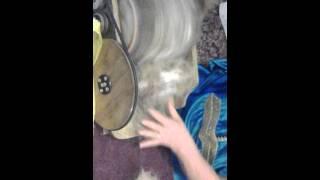 Пряду (расчесываю) шерсть собак