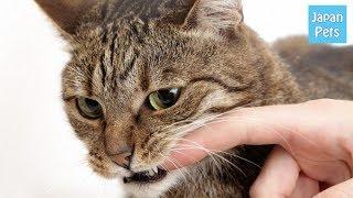 猫を飼っている人が経験する悩みの一つが猫の噛み癖です。いくら子猫と...