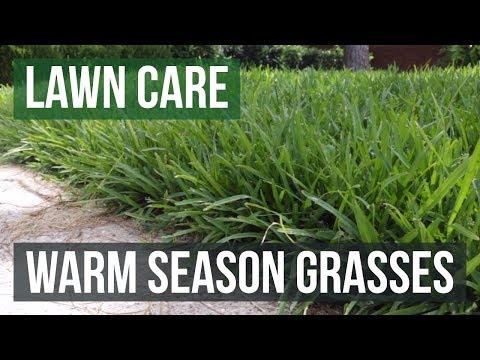 Warm Season Grasses: A Lawn Care Guide