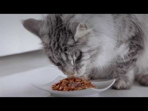 Purina ONE® Adult Cat Food Mixed Feeding