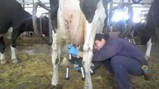 Projet Francais Produits laitiers