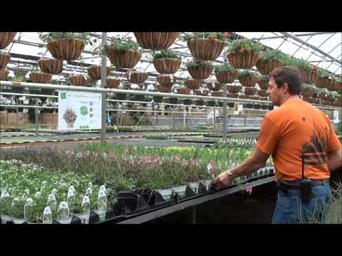 do-it-yourself-planters-and-flower-boxes-at-rice-road-greenhouses