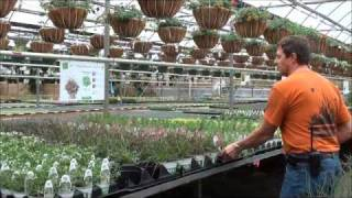Do it yourself Planters and Flower Boxes at Rice Road Greenhouses