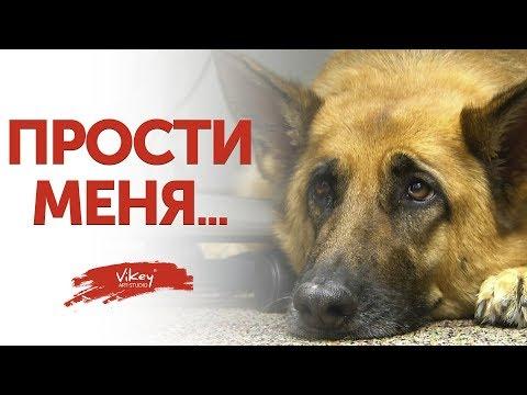 """Стих """"Прости меня..."""" Л. Киракосовой, читает В. Корженевский (Vikey), 0+"""