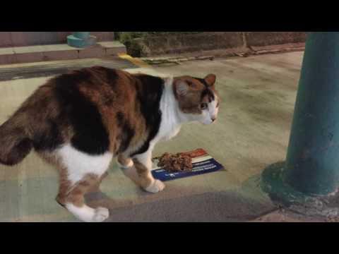 Singapore's Community Cats