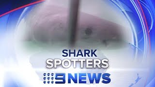 New Shark Spotting Tactics Reduce Attacks In Cape Town | Nine News Australia