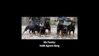 Rottweiler Training #cafu Vom Egy Rottweiler Kennel.