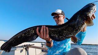 Ловля Сома Рыбалка на Змееголова Рыбалка в Казахстане Рыбалка на Балхаше ФИЛЬМ 2