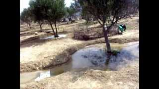 Irrigating- Spanish Style
