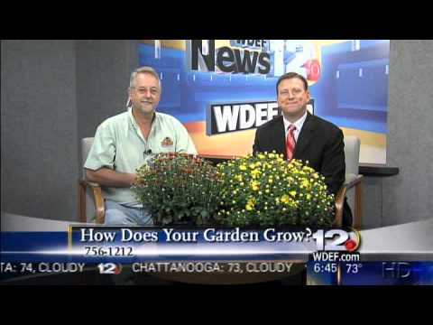 WDEF News 12 This Morning, Friday, September 17, 2010 WDEF News 12 News,  Weather and Sports for Chattanooga and the Tennessee Valley