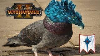 High Elves vs Beastmen | ANGRY FROST PIGEON : Total War Warhammer 2