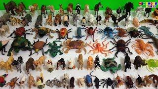 Coleccion de Animales 🐻 🦀  🦋  | Animales de la Selva Montaña Granja Mar Insectos | Mimonona Stories