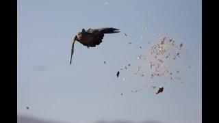 Montaraz Lodge 2017 - Pigeon Hunting - Córdoba, Argentina