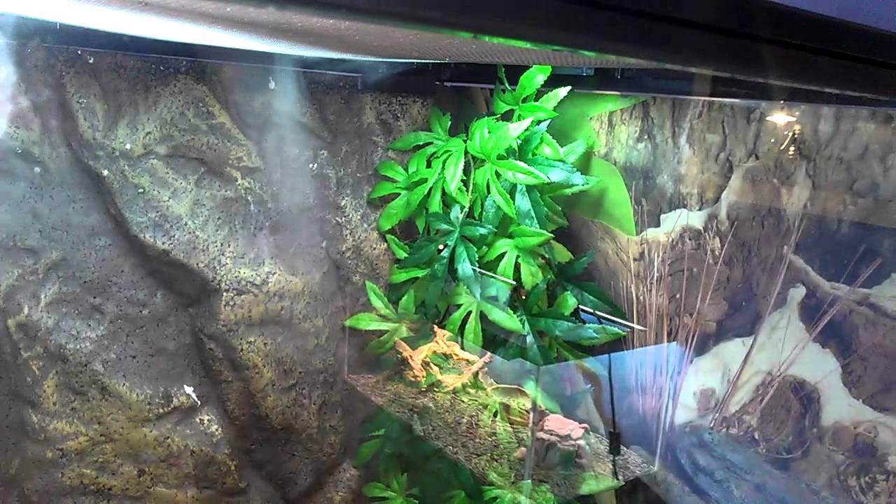 Homemade Reptile Humidifier Fogger Youtube