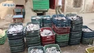 بالفيديو : تعرف علي  سوق السمك وأسعاره وأنواعه المختلفة