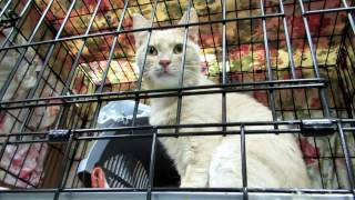 Самый большой приют для кошек в России. Муркоша