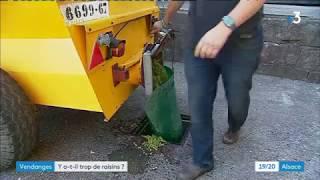 La surproduction de raisin en Alsace