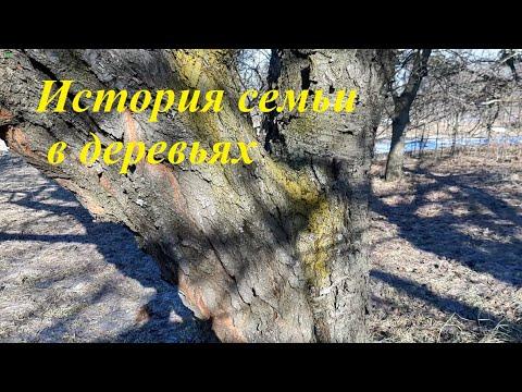 Деревья на отцовском подворье или история семьи в деревьях