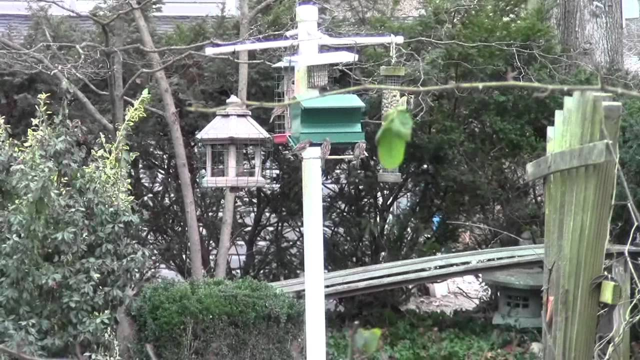 feeding backyard birds in winter youtube