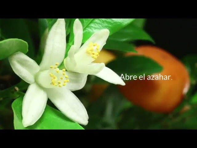 Abre el Azahar