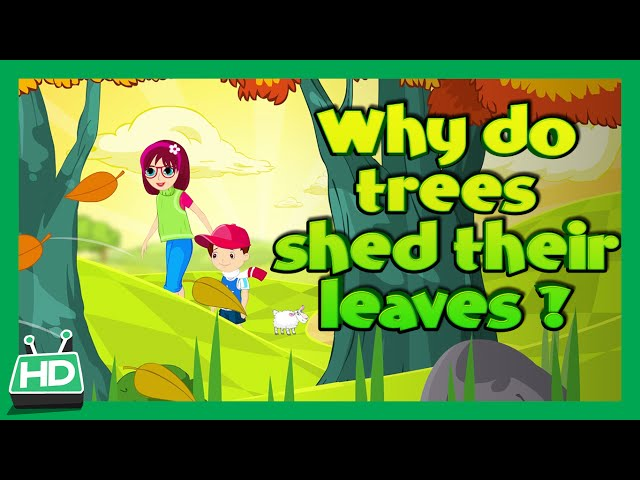 Why Do Trees Shed Their Leaves In Autumn Season?