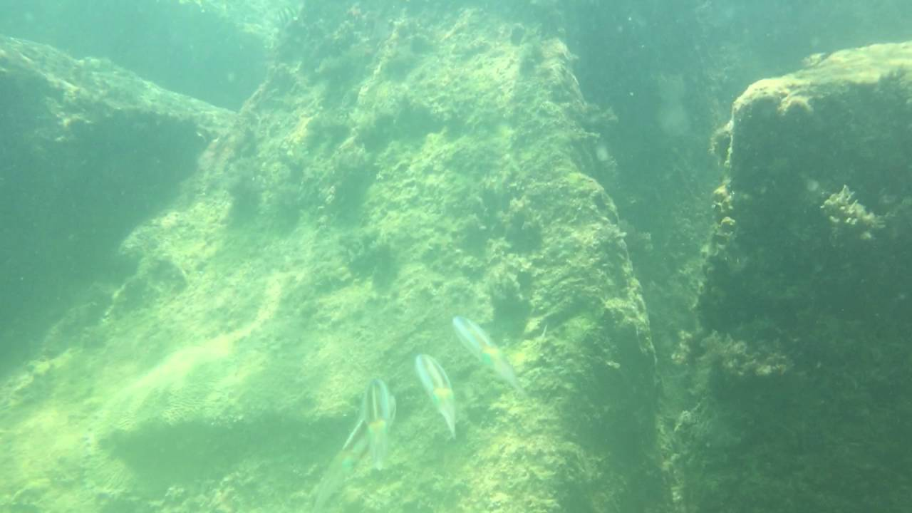 Miami Snorkeling South Beach Pointe Usa