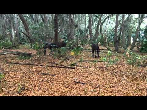 Cumberland Island Trip 5 18 12