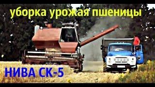 Комбайн НИВА СК-5 уборка урожая пшеницы.