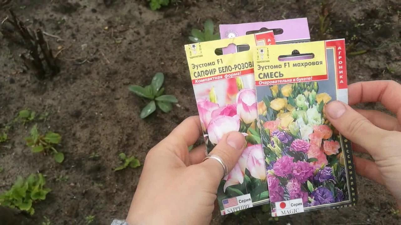 Эустома эхо желтая f1, семена (66151) заказывайте семена в интернет магазине беккер в беларуси. ✓гарантия качества. ✓печатная брошюра по.