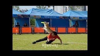 반려견과 하나되는 독 스포츠, Disc Dog [Frisbee] [skyhoundz]