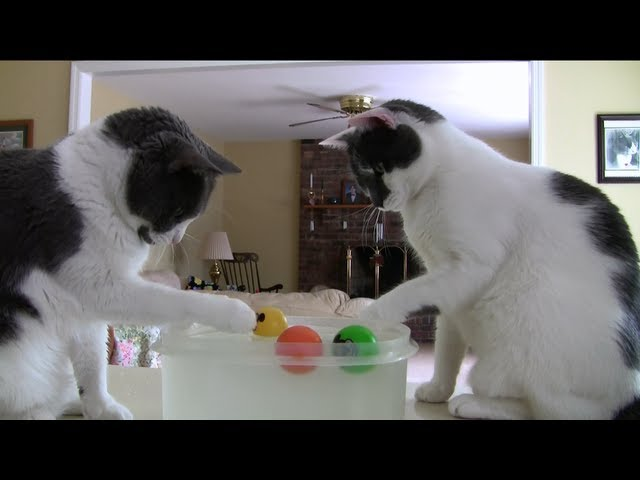 Cats Playing Water Soccer