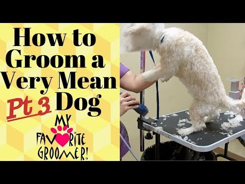 Grooming a mean dog 3