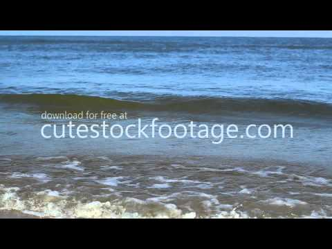 focused-coast-side-view---free-hd-1080p-stock-footage---cutestockfootage.com