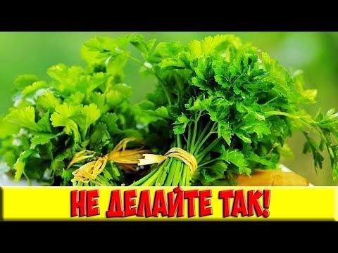 Главная ошибка всех домохозяек! Специи и травы, которые нельзя сушить!